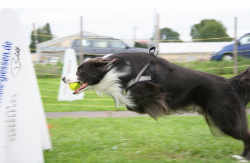 Flyball Foto 7